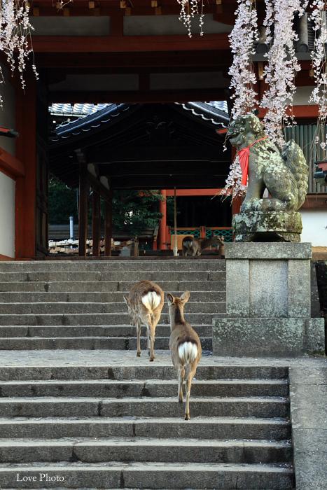 氷室神社の朝_a0116472_11543415.jpg