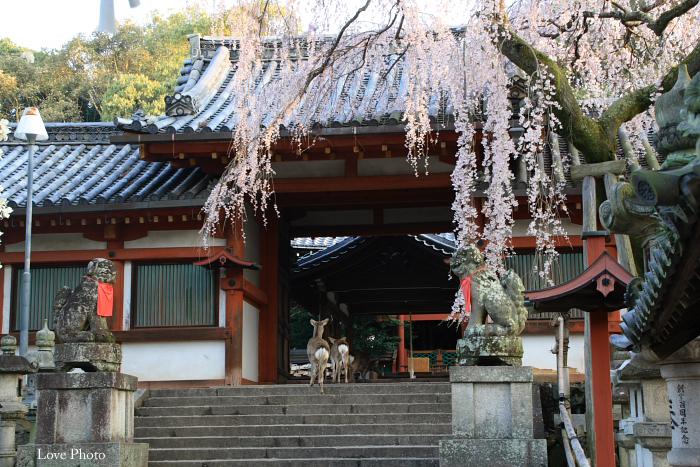 氷室神社の朝_a0116472_1155392.jpg