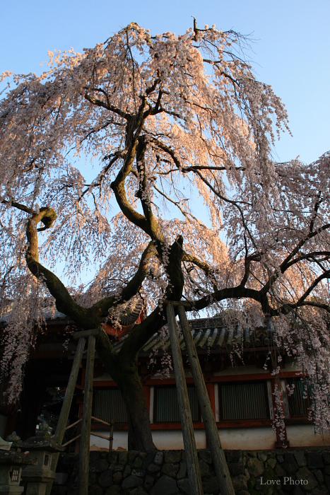 氷室神社の朝_a0116472_11581516.jpg
