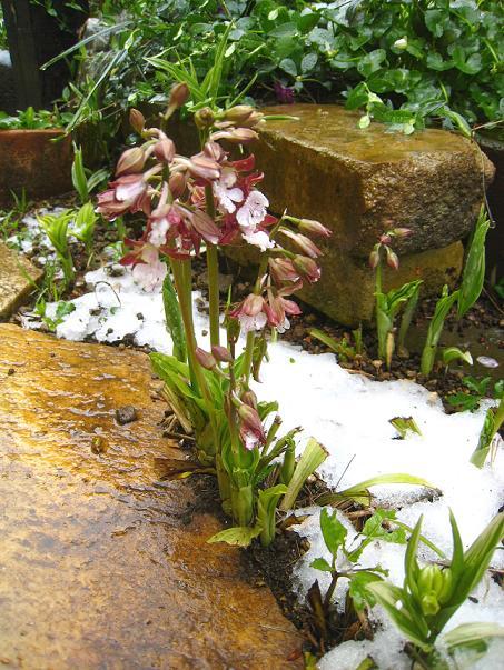 4月17日の雪       ~41年ぶりの春の雪~_a0107574_23101434.jpg