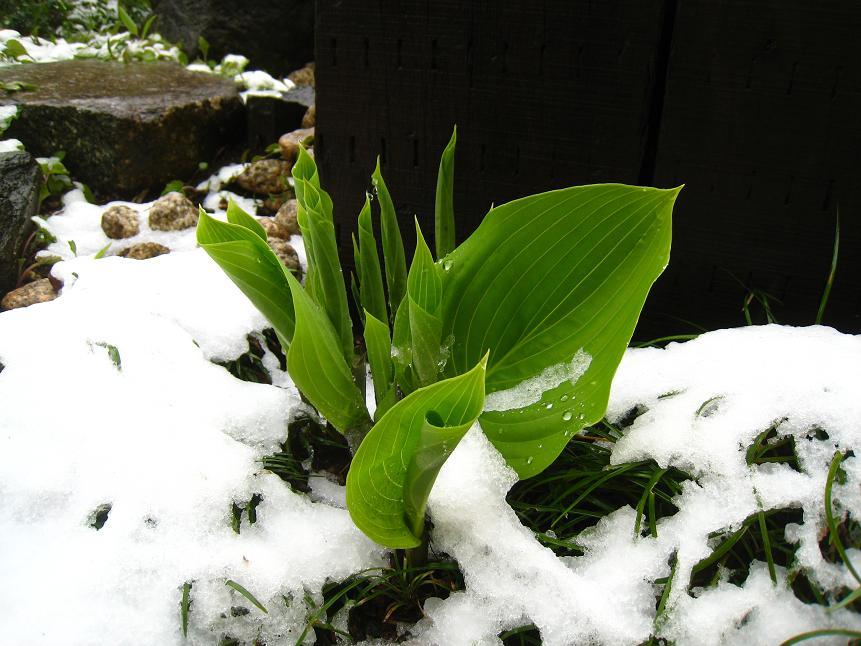 4月17日の雪       ~41年ぶりの春の雪~_a0107574_2310689.jpg