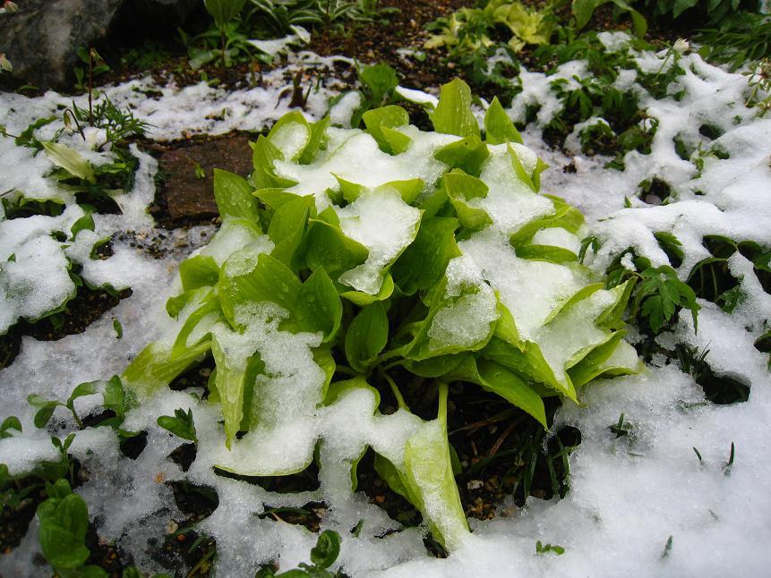 4月17日の雪       ~41年ぶりの春の雪~_a0107574_2395766.jpg