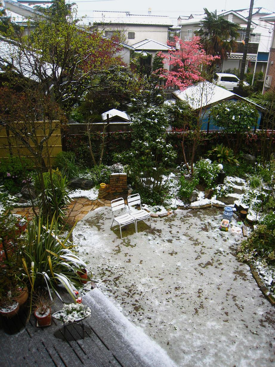 春の雪_a0107574_756755.jpg