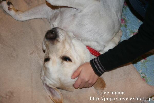 ブログ開設2周年、盲導犬ボランティア10周年記念。_b0136683_15323824.jpg