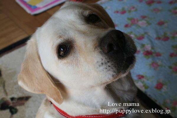 ブログ開設2周年、盲導犬ボランティア10周年記念。_b0136683_15395763.jpg