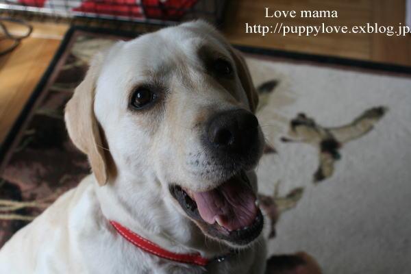 ブログ開設2周年、盲導犬ボランティア10周年記念。_b0136683_1540927.jpg