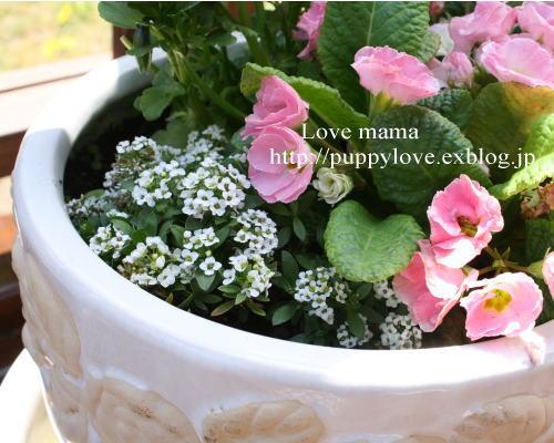ブログ開設2周年、盲導犬ボランティア10周年記念。_b0136683_15553815.jpg
