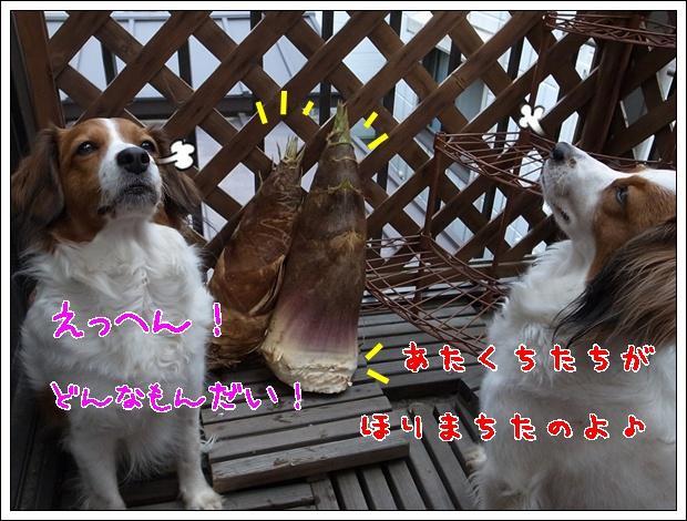 c0075585_1593481.jpg