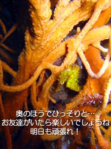 4月15日 新婚旅行でピピ島ダイブ!_f0144385_938408.jpg