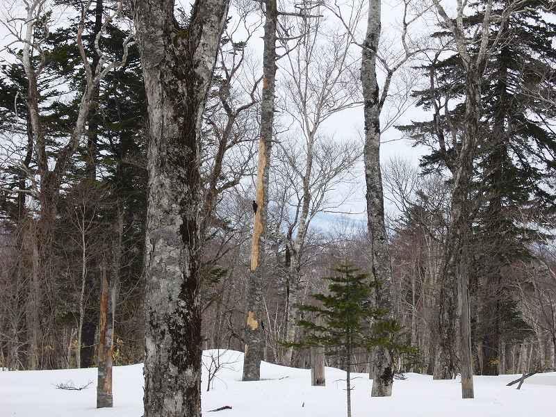 4月17日、樽前山と多峰古峰山をつなぐ_f0138096_20474652.jpg