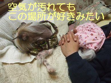 f0179203_7191410.jpg