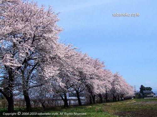 やっと春?_b0029706_21581355.jpg
