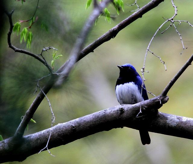 夏鳥がやってきた・・・_c0213607_23403162.jpg