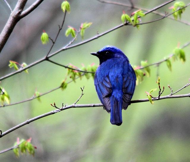夏鳥がやってきた・・・_c0213607_23404118.jpg
