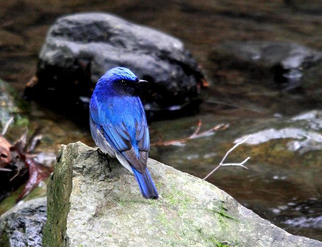 夏鳥がやってきた・・・_c0213607_234102.jpg