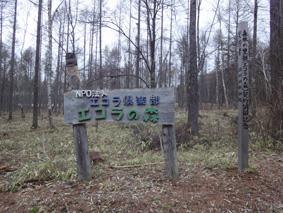 長野県原村の「エコラの森」の間伐作業に参加しました。_c0195909_15572211.jpg