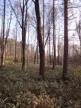 長野県原村の「エコラの森」の間伐作業に参加しました。_c0195909_15574791.jpg