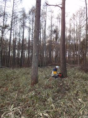 長野県原村の「エコラの森」の間伐作業に参加しました。_c0195909_15582155.jpg