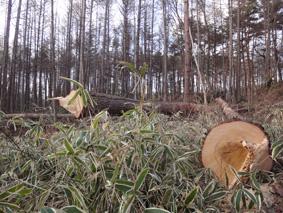 長野県原村の「エコラの森」の間伐作業に参加しました。_c0195909_15583781.jpg
