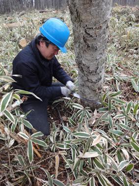 長野県原村の「エコラの森」の間伐作業に参加しました。_c0195909_1605886.jpg