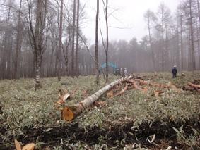 長野県原村の「エコラの森」の間伐作業に参加しました。_c0195909_1614174.jpg