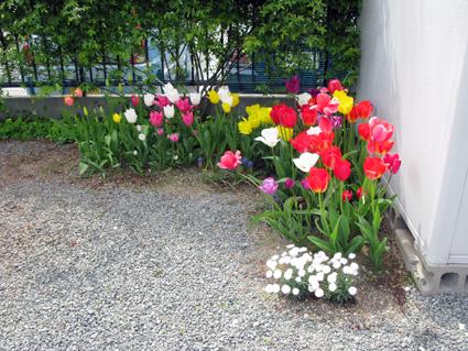 春の庭_f0129726_21554389.jpg