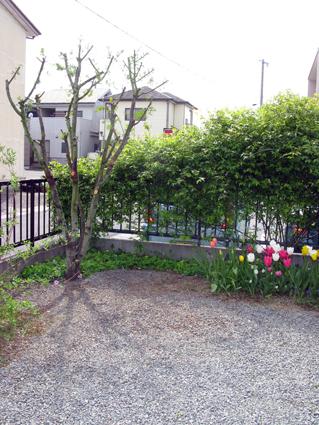 春の庭_f0129726_21593895.jpg