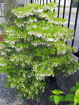 春の庭_f0129726_2202152.jpg