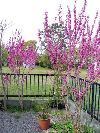 春の庭_f0129726_2205389.jpg