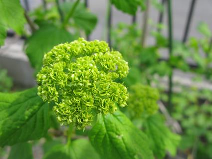 春の庭_f0129726_2223073.jpg