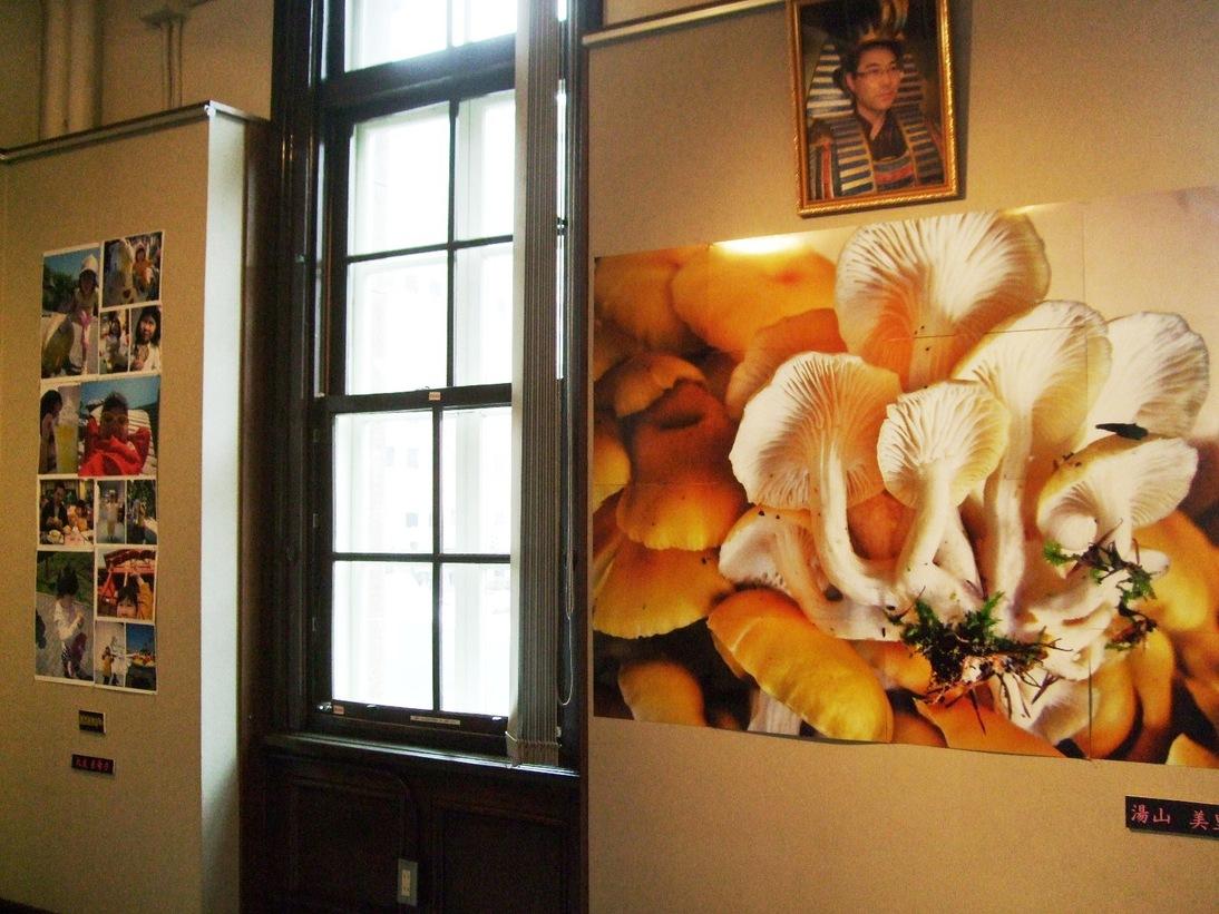 1271) 資料館 「ぽんち展 7 ~黄色い写真展~」 4月13日(火)~4月25日(日)  _f0126829_18452632.jpg