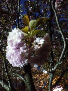 春気分♪_f0039541_2243634.jpg