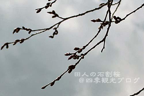 f0105342_15535769.jpg