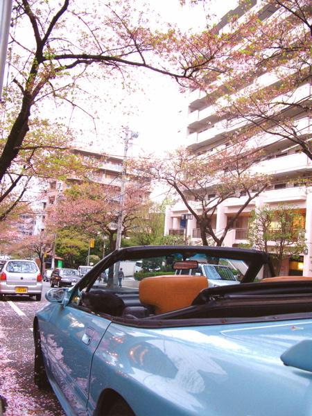 カッパ葉桜_c0039145_2238346.jpg