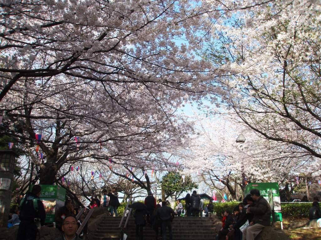 2010年、お花見。_c0119259_15413057.jpg