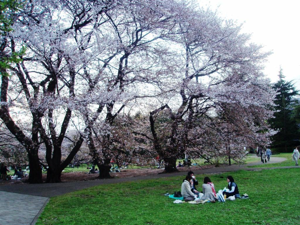 2010年、お花見。_c0119259_15421212.jpg