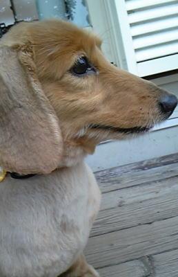 狂犬病予防注射_b0038381_2363032.jpg