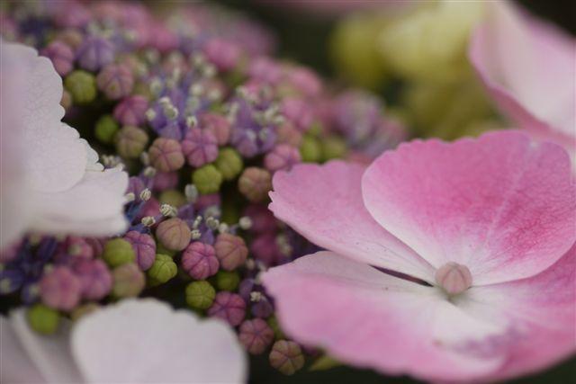 室内ガーデンは、すっかり初夏の花_b0175688_21142236.jpg