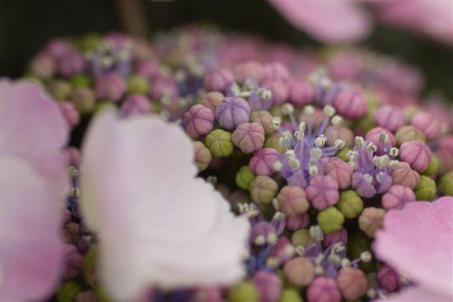 室内ガーデンは、すっかり初夏の花_b0175688_21143392.jpg