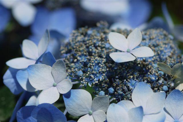 室内ガーデンは、すっかり初夏の花_b0175688_21145366.jpg