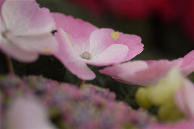 室内ガーデンは、すっかり初夏の花_b0175688_2114956.jpg