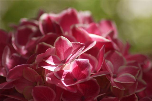 室内ガーデンは、すっかり初夏の花_b0175688_21151441.jpg