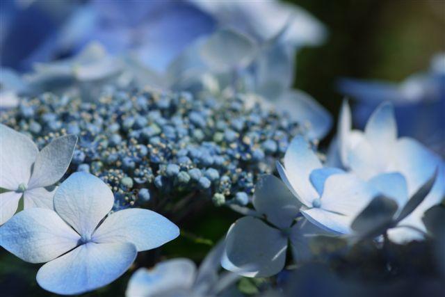 室内ガーデンは、すっかり初夏の花_b0175688_2115539.jpg