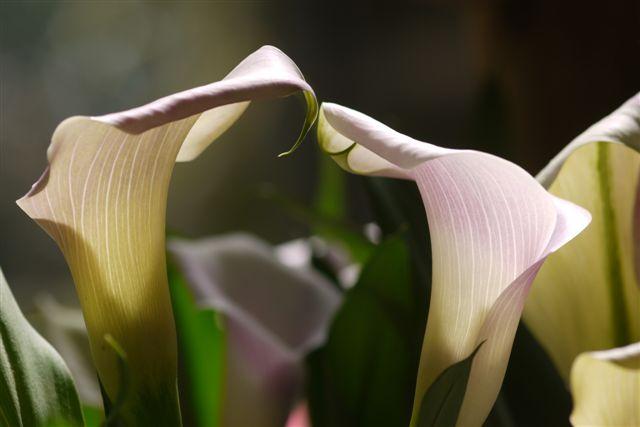 室内ガーデンは、すっかり初夏の花_b0175688_21161287.jpg