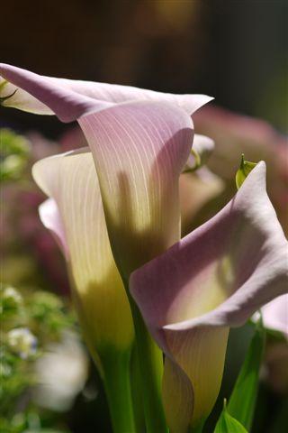 室内ガーデンは、すっかり初夏の花_b0175688_21162337.jpg