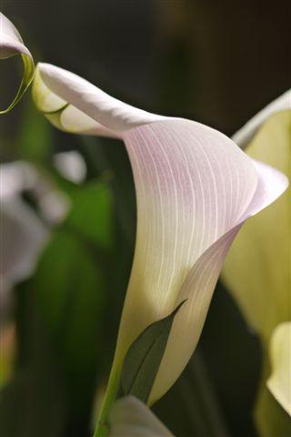 室内ガーデンは、すっかり初夏の花_b0175688_211626.jpg