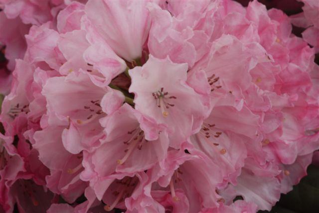 室内ガーデンは、すっかり初夏の花_b0175688_21164626.jpg