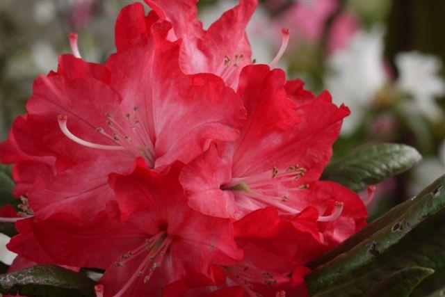 室内ガーデンは、すっかり初夏の花_b0175688_21172281.jpg