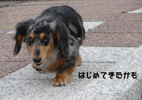 f0195891_2056327.jpg