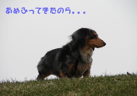 f0195891_205813.jpg